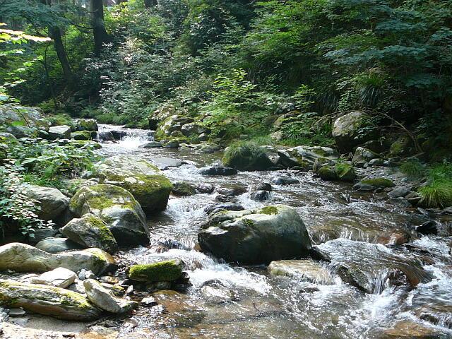 実家の近所の川