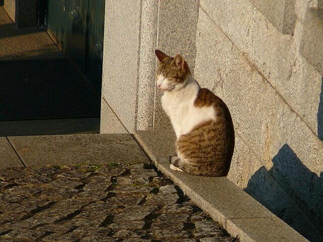 墓地を見つめるネコ
