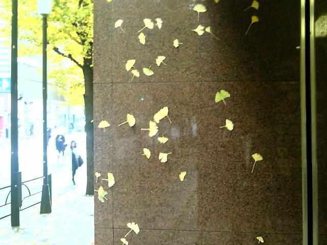 壁に貼りついた葉っぱ