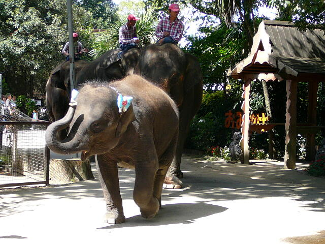 園内を象さん通過