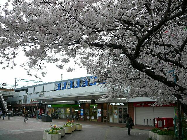 尼崎駅前の桜