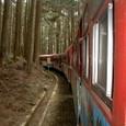 森の中を走る