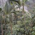亜熱帯の景色を走る